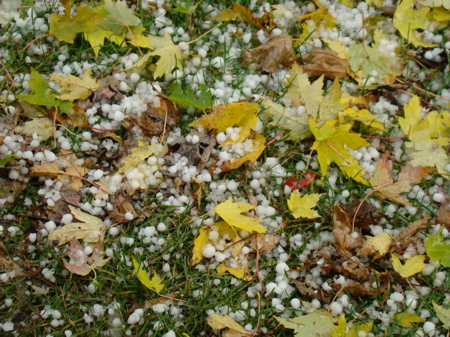Hail and leaves that came down with its impact.